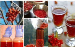 Чудесное вино из красной рябины в домашних условиях: подробный рецепт